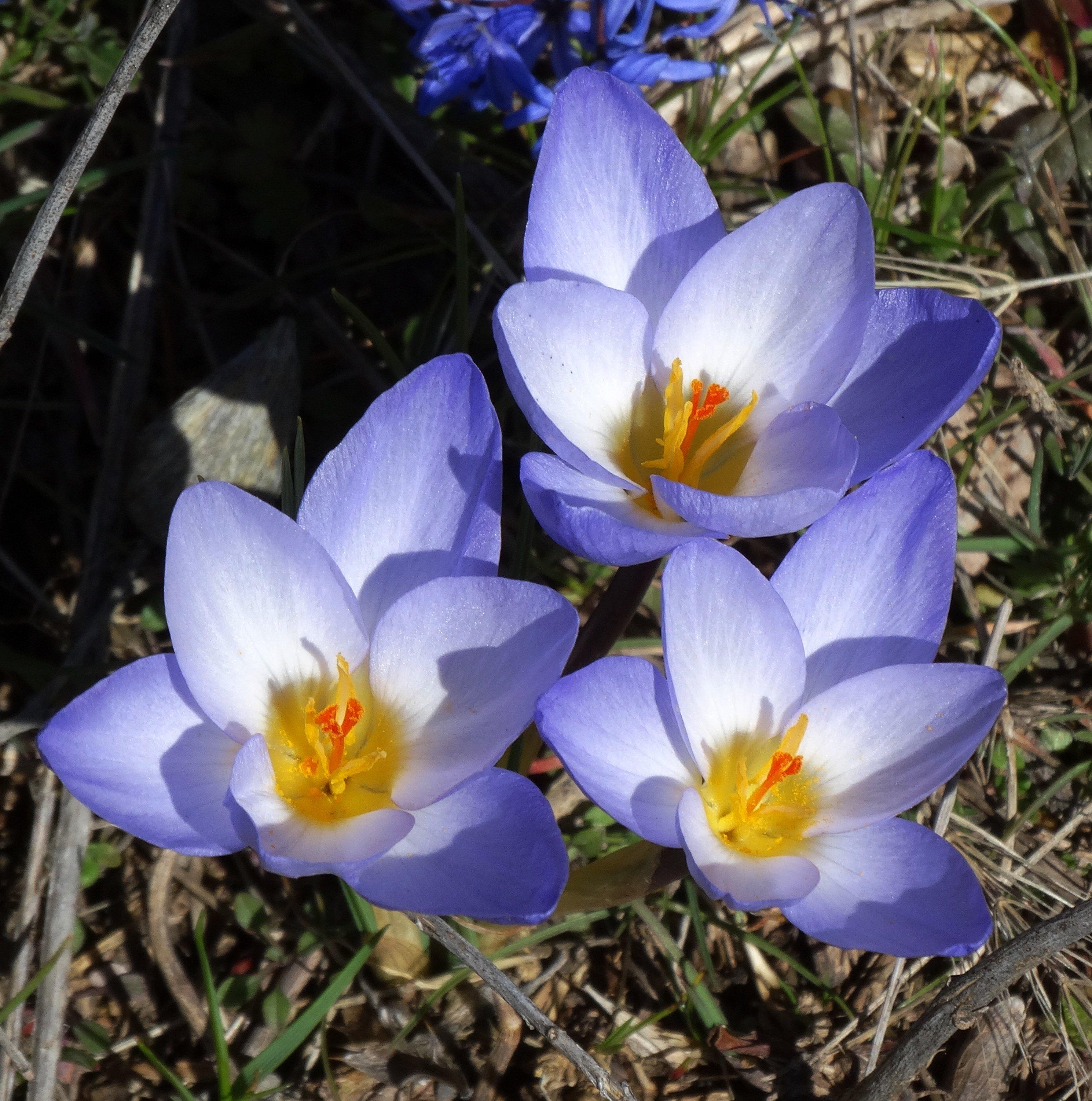 Yabani çiçekler Anasayfa